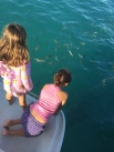 Watching the goliath grouper under the boat.
